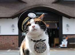 Резултат слика за мачка Тама