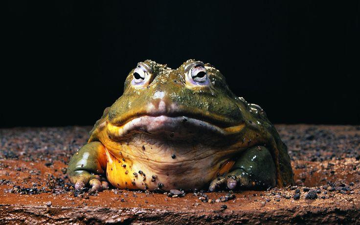 frog pic, 385 kB - Peyton Turner