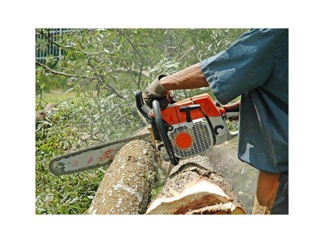 Voor je overgaat tot het vellen van de boom, ga je best eens langs op de stedenbouwkundige dienst van je gemeente. Het kan namelijk zijn dat er een kapverordening geldt.