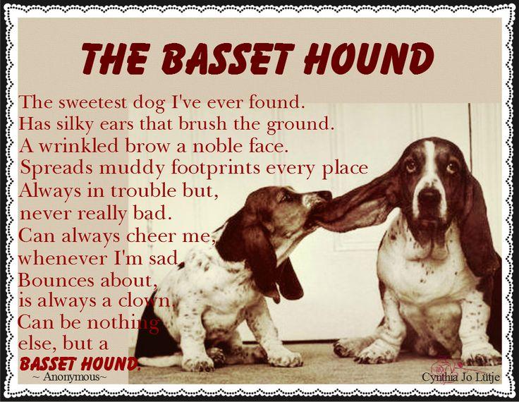 Basset Hound Poem.