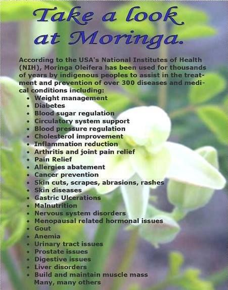 Moringa Oleifera, the miracle tree. Get more information today at www.fitnessrocks.myzija.com