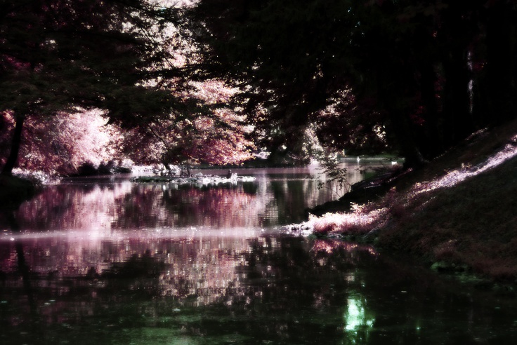 a special look at one of the small lakes in the park of monza