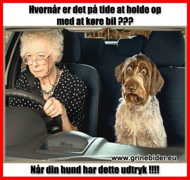 Hvornår er det på tide at holde op med at køre bil. Når din hund har dette udtryk.