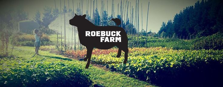 Jodi Roebuck, Roebuck Farm. We garden biointensively. We grow, save & sell heritage seed. We graze restoratively. We consult, educate, and custom train these three things globally. https://www.facebook.com/RoebuckFarm/?fref=ts