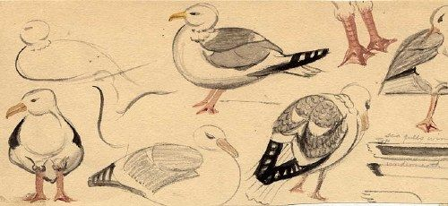 sketches of seagulls