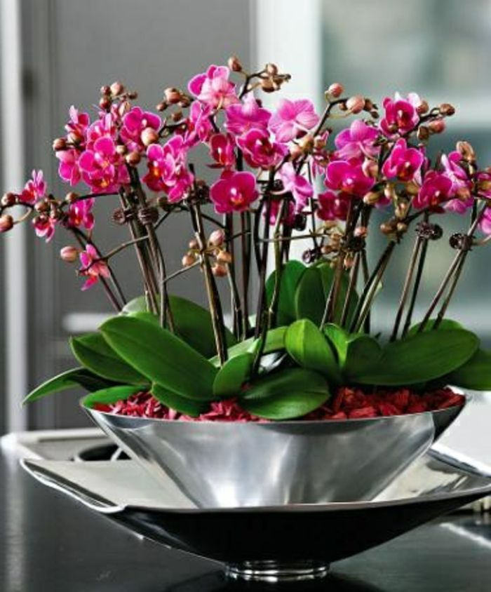 Les 25 meilleures id es de la cat gorie arrangements d - Doit on couper les tiges des orchidees ...