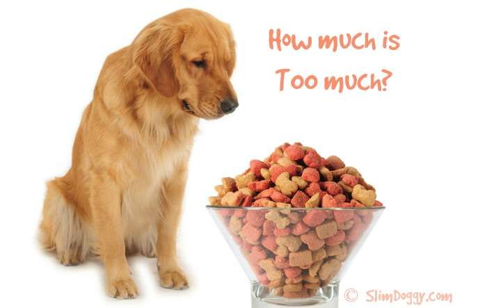 How Much Canned Pumpkin To Feed Dog