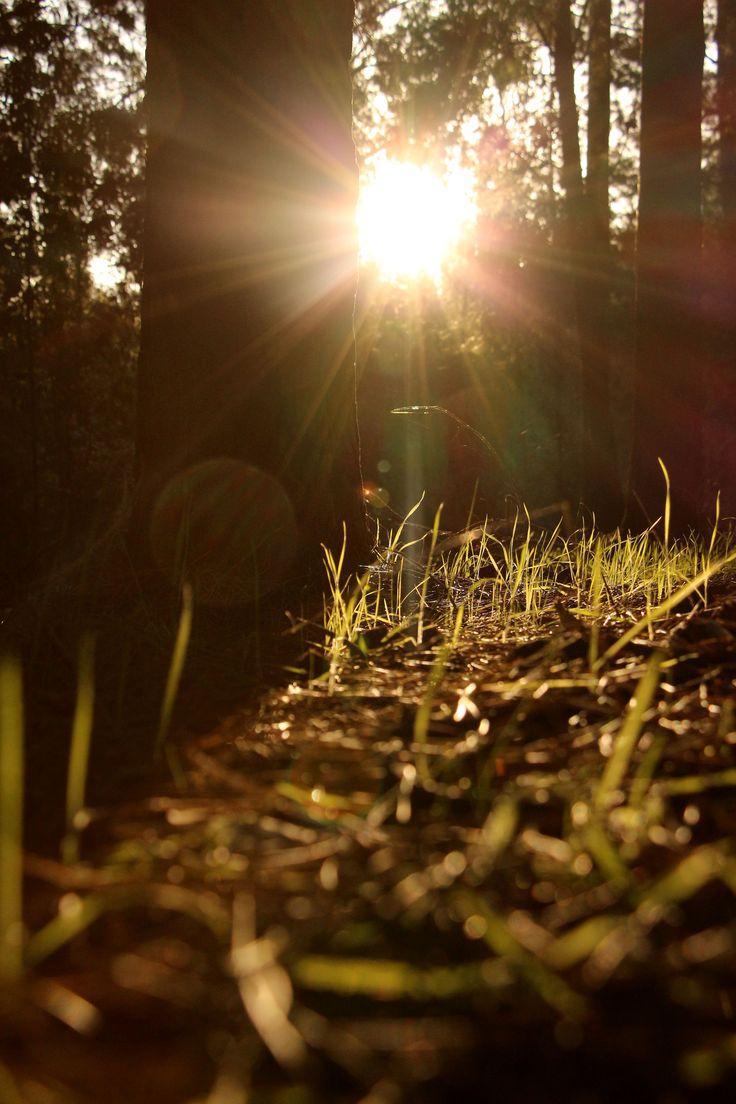 nostalgia en el bosque