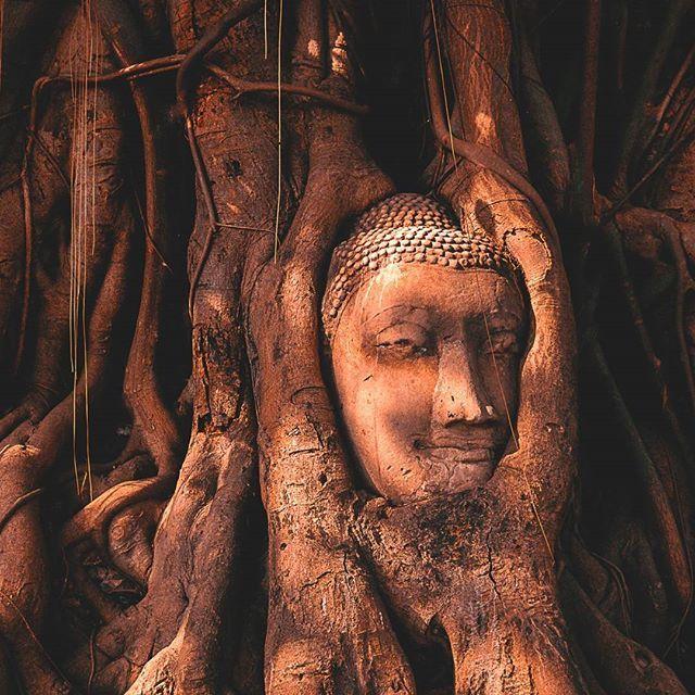 #architecture #asia #ayutthaya #backpacking #buddha #culture #explore #globetrotter #history #instatravel #lights #livingthedream #mind #monument #photography #photooftheday #shades #spiritual #temple #thailand #tourism #travel #travelasia #travelblogger #traveldiaries #travelphotography #traveltheworld #viaje #voyage #zen  #Regram via @freelensers