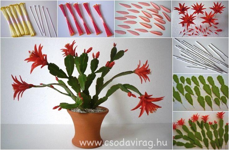 Rhipsalidopsis gaertneri - Húsvéti kaktusz https://www.facebook.com/Csodavirag