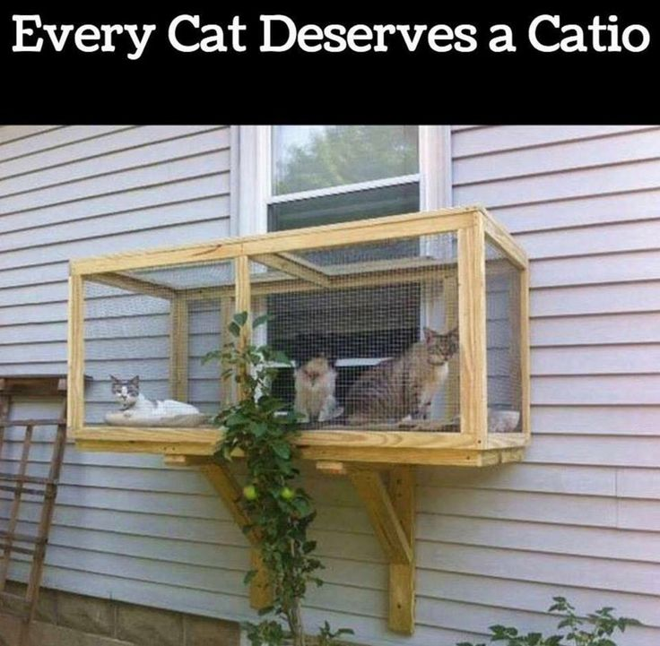 Sooo my cat would love this.