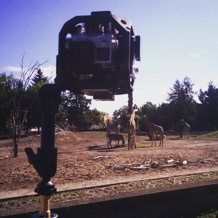 #filming #girrafes at the #zoo. #gopro #goprooftheday #goprohero4 #vr #vrpremium #virtualreality #animals #savannah #wildlife #africa #movie