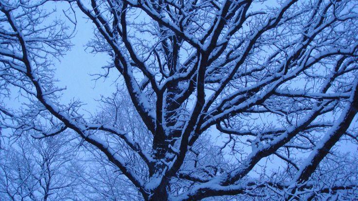 Winter dusk photo by Svetlana