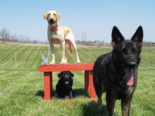 Help Your Puppy Or Dog Become More Happy And Obedient With These