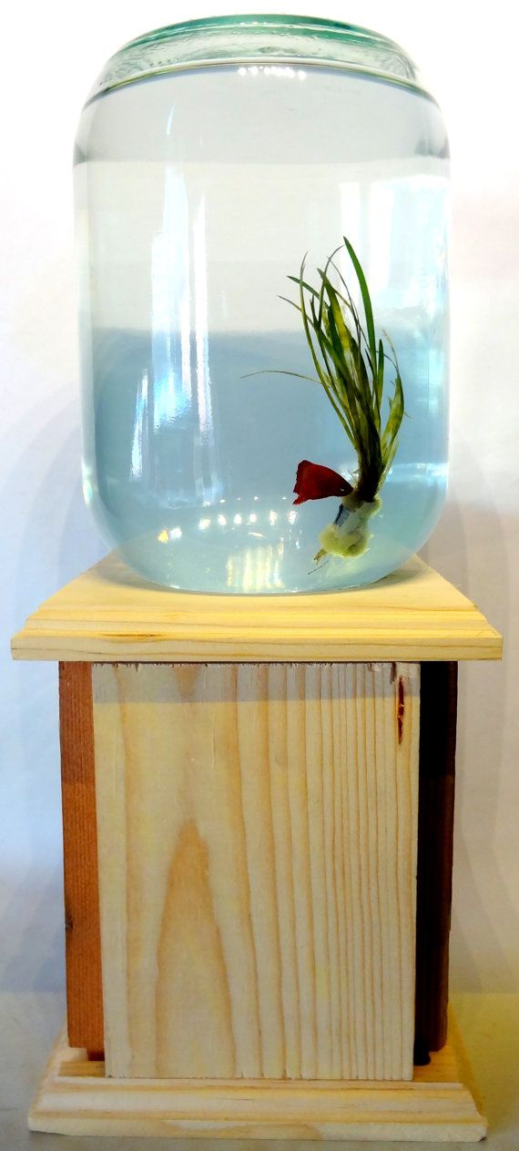 Hey i found this really awesome etsy listing at http for Clean fish tank
