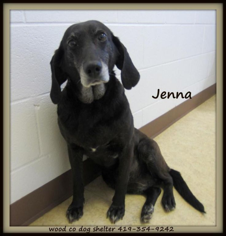Meet JENNA a Petfinder adoptable Labrador Retriever Dog | Bowling Green, OH | Adoption PolicyAll of our dogs are $75.00 Included in that price is a $50.00 certificate, which...