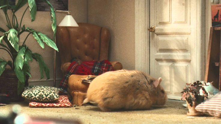 Shared Flat. Hamster commercial.