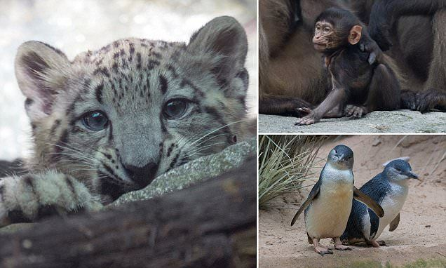 From snow leopard cubs to miniature penguins: Bronx Zoo's new arrivals