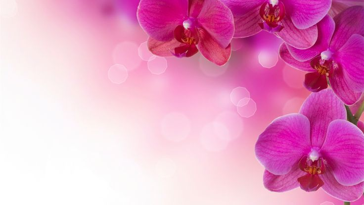 Floral Flowers Wallpaper Pink High Resolution