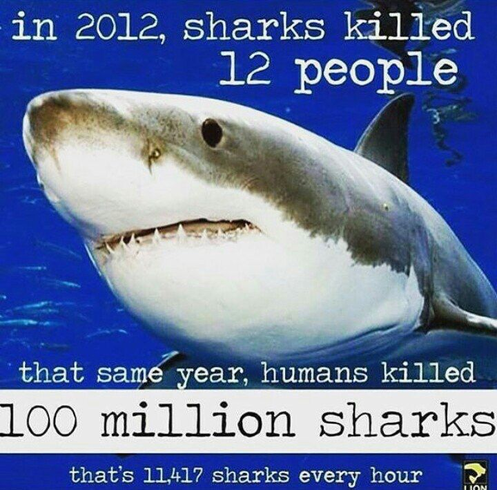 Pin by Albert Rowling on Food for thought   Shark facts ...
