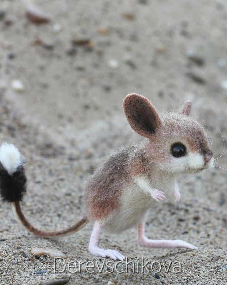 Gerboa Kangaroo Rat So Cute Tommy Proctor Cute Gerboakangaroo Proctor Ratso Tommy Cute Animals Cute Baby Animals Baby Animals