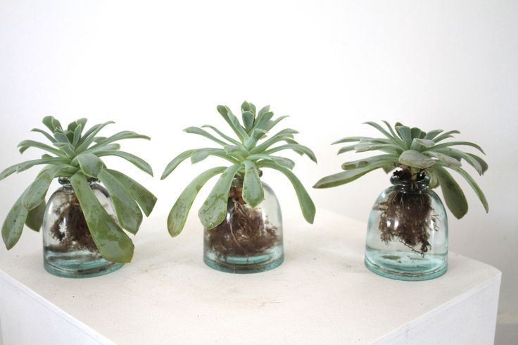 Succulents in recycled glass. Spruce 4313 Fountain Avenue @ Sunset Los Angeles. www.sprucela.com