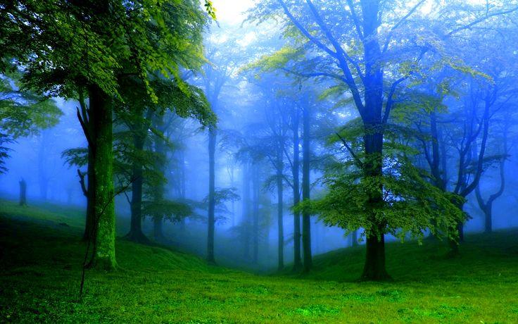 Forest Fog Wide Desktop Background Wallpaper Free Nature