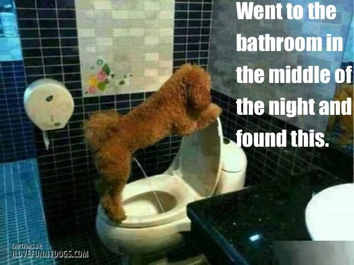 Surprise! Dog in the bathroom!