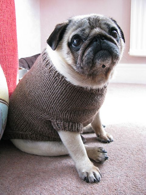Knitting Pattern For Pug Jumper : Pin by Els on Animals Pinterest