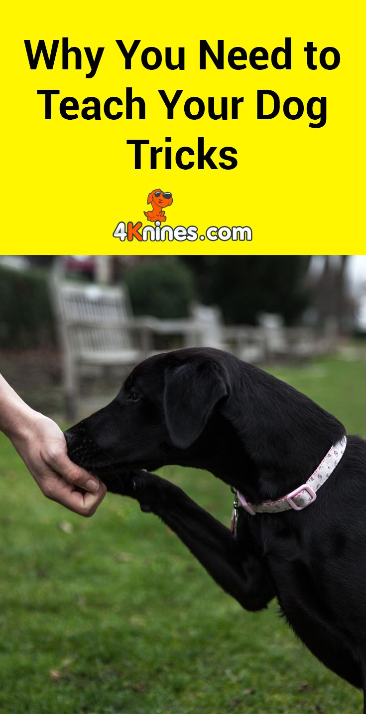 Dogs love to train and learn behaviors so it may be time to teach your dog a new trick. Here's a dog program where your pup can learn new tricks. This program doesn't require you go to any classes or special training sessions - you can do everything right from home. Read more here!