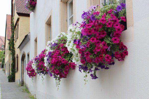 Okno letní dekor truhlíky na květiny myšlenky pestré petúnie dům dekor