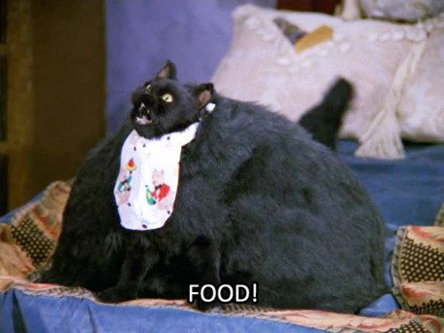 When you see food | 27 Times Salem The Cat Said What You Were Thinking