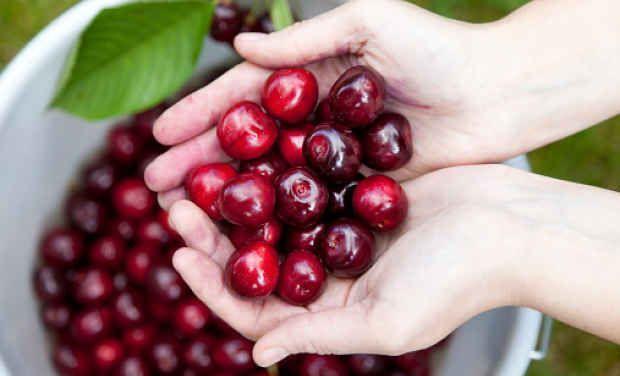 Estos son los increibles beneficios para la salud de la cereza que aún no conocias