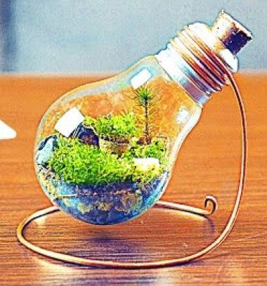 best 25 light bulb terrarium ideas on pinterest light bulb crafts light bulb and light bulbs. Black Bedroom Furniture Sets. Home Design Ideas