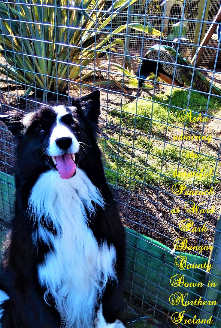 Dog Training Bangor Northern Ireland