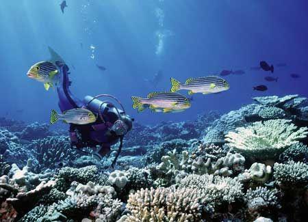 scuba the worlds 2nd great barrier reef, belize