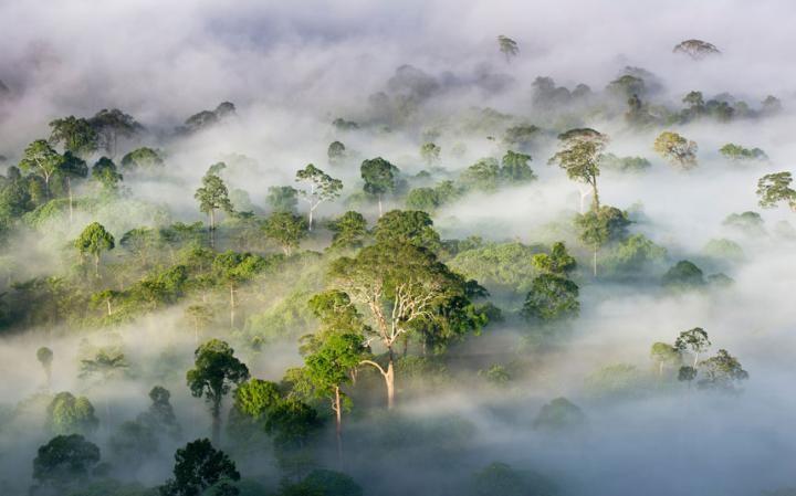 Danum Valley, Sabah, Borneo.