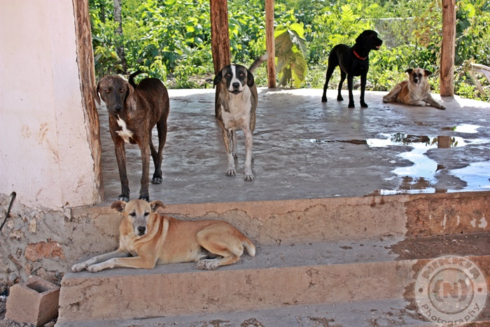 Tierra De Animales.   Check this place out and visit.  www.tierradeanimales.org