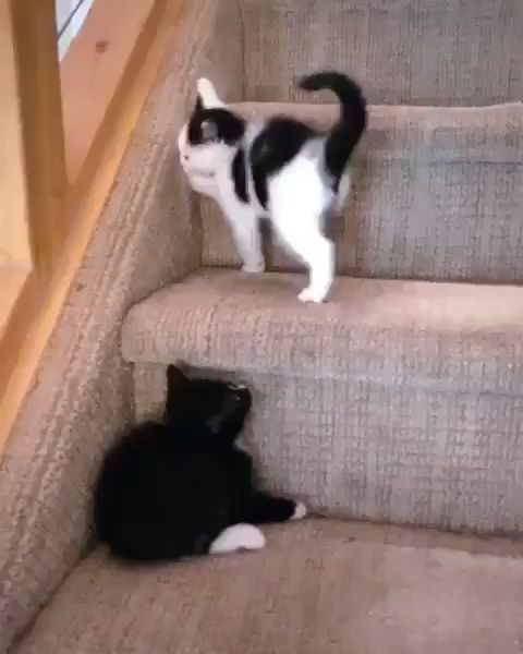 Cute little kittens playing together