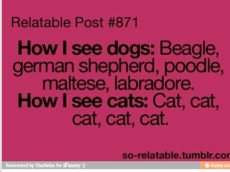 "So true . The only cat names I know are ""black cat"", ""brown cat"", orange cat"", ""tan cat"" etc."
