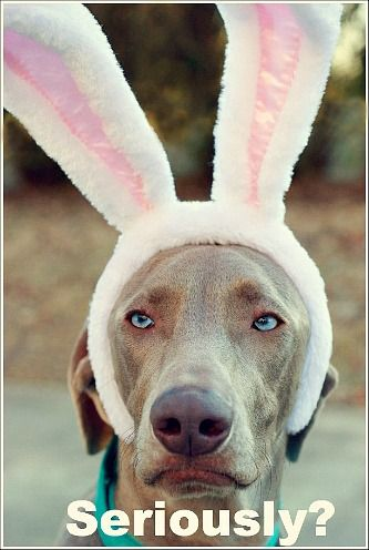 Easter Decorating Ideas...for your weimaraner...
