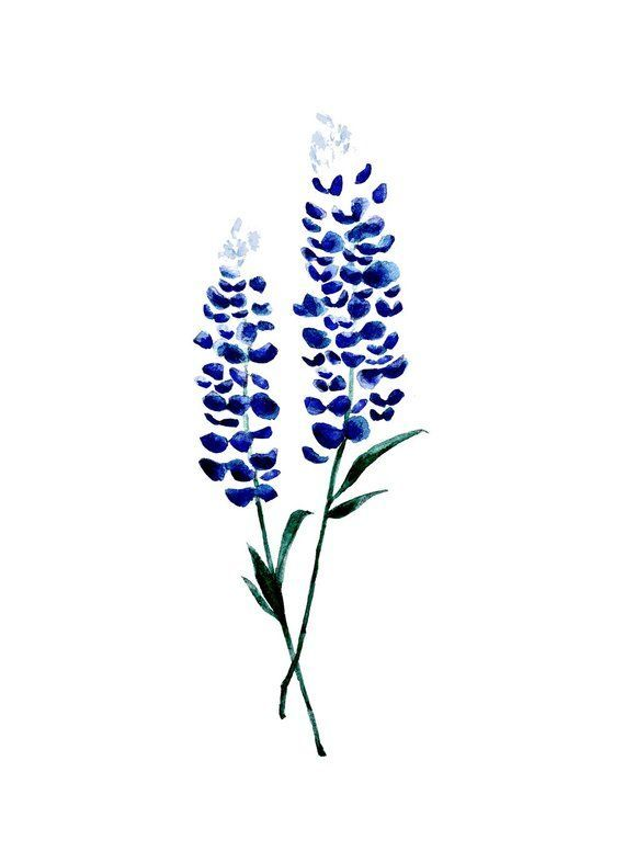 Bluebonnet Flower Tattoo Design by Pasadya – Floral Watercolor Tattoo – Texas Willo …   – Körperkunst