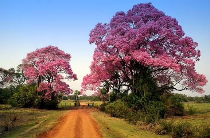Colors of The Pantanal, Brazil