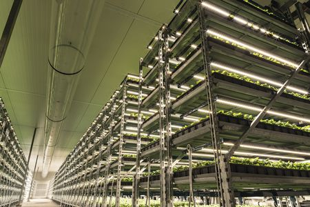The true efficacy of LED fixtures for horticultural lighting depends on many factors