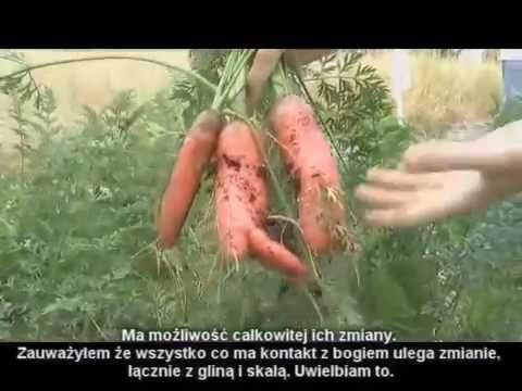 Nauka metody -  Back To Eden część 3 -  PL Zrębki, Plony, Gleba - Uprawy...