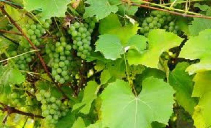 In Italia cresce la 'sete' di vino Bio.    Nel 2012 infatti il Bel Paese, secondo alcuni dati pubblicati da The Wine Italia ha registrato una crescita del fatturato del 7,3%.    Complimenti agli italiani sempre più salutisti!     http://www.thewineitalia.com/articoli/rif000001_I_1149_Pi-Vino-Bio-Sulle-Tavole-Italiane.aspx    Più Vino Bio Sulle Tavole Italiane The Wine italia