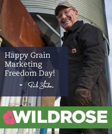 Happy Grain Marketing Freedom Day everyone! Did you know two years ago today Wildrose MLA Rick Strankman was pardoned by Prime Minister Stephen Harper after being charged by the federal Liberals for selling his own wheat? [Read about it here: http://wildro.se/grainfreedom]  Make sure to celebrate with Rick this important day of freedom for grain farmers across western Canada! #ableg #wrp #abpoli #alberta
