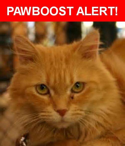 Please spread the word! Snuggles was last seen in Danville, CA 94506.    Nearest Address: Near Shelterwood Dr & Shelterwood Ln