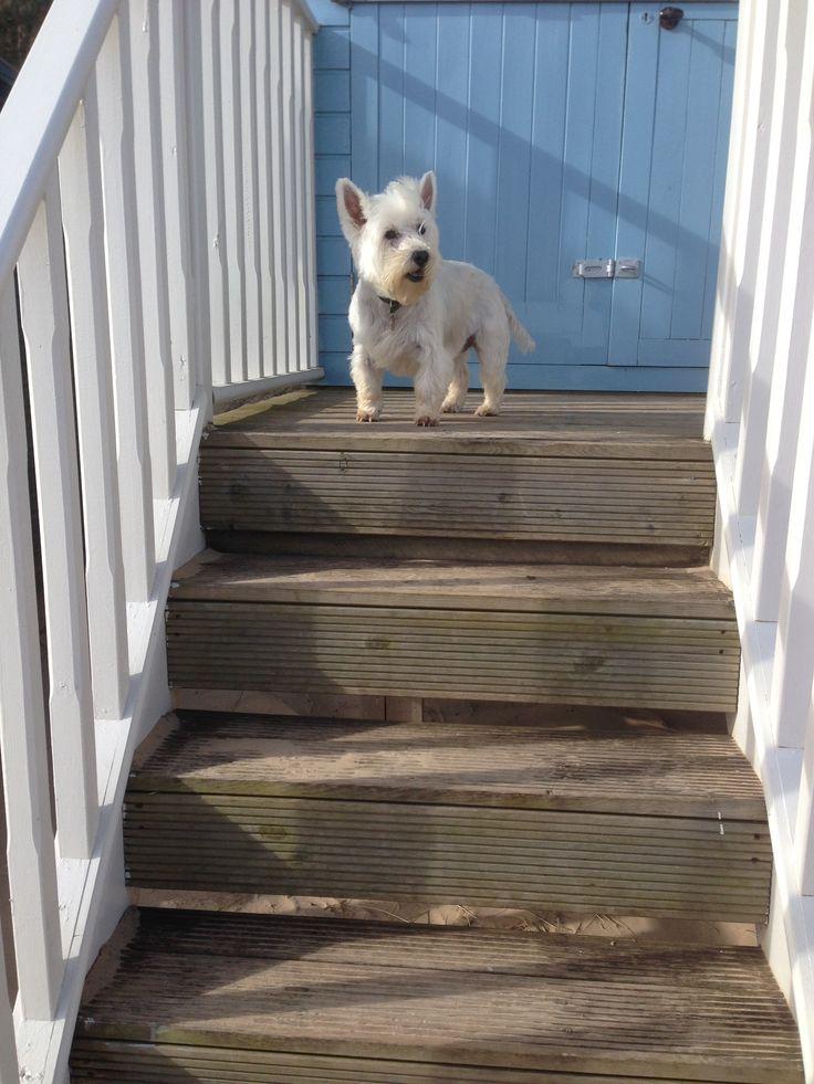 Poppy loves the beach huts