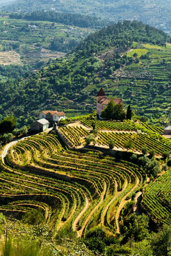 Wine country: Douro Valley, Portugal